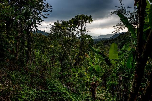 jo_dzsungel